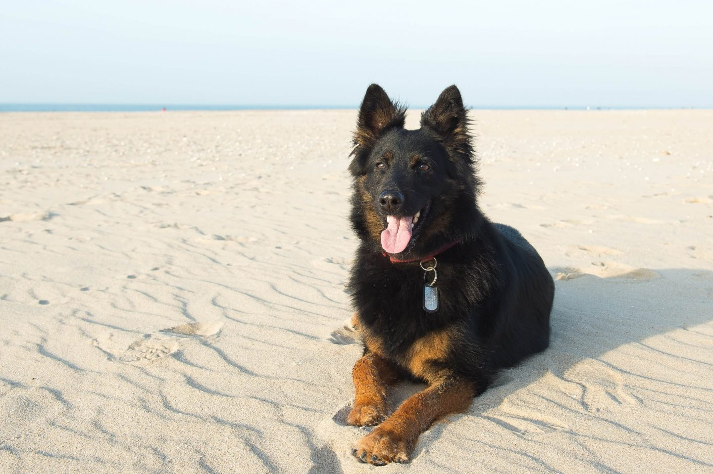 Dog movie trivia questions and answers - Alsatian