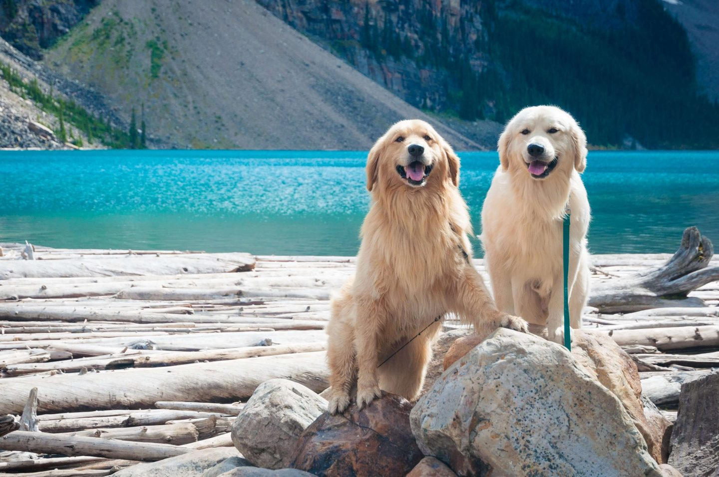 Dog knowledge quiz - Dogs at a lake