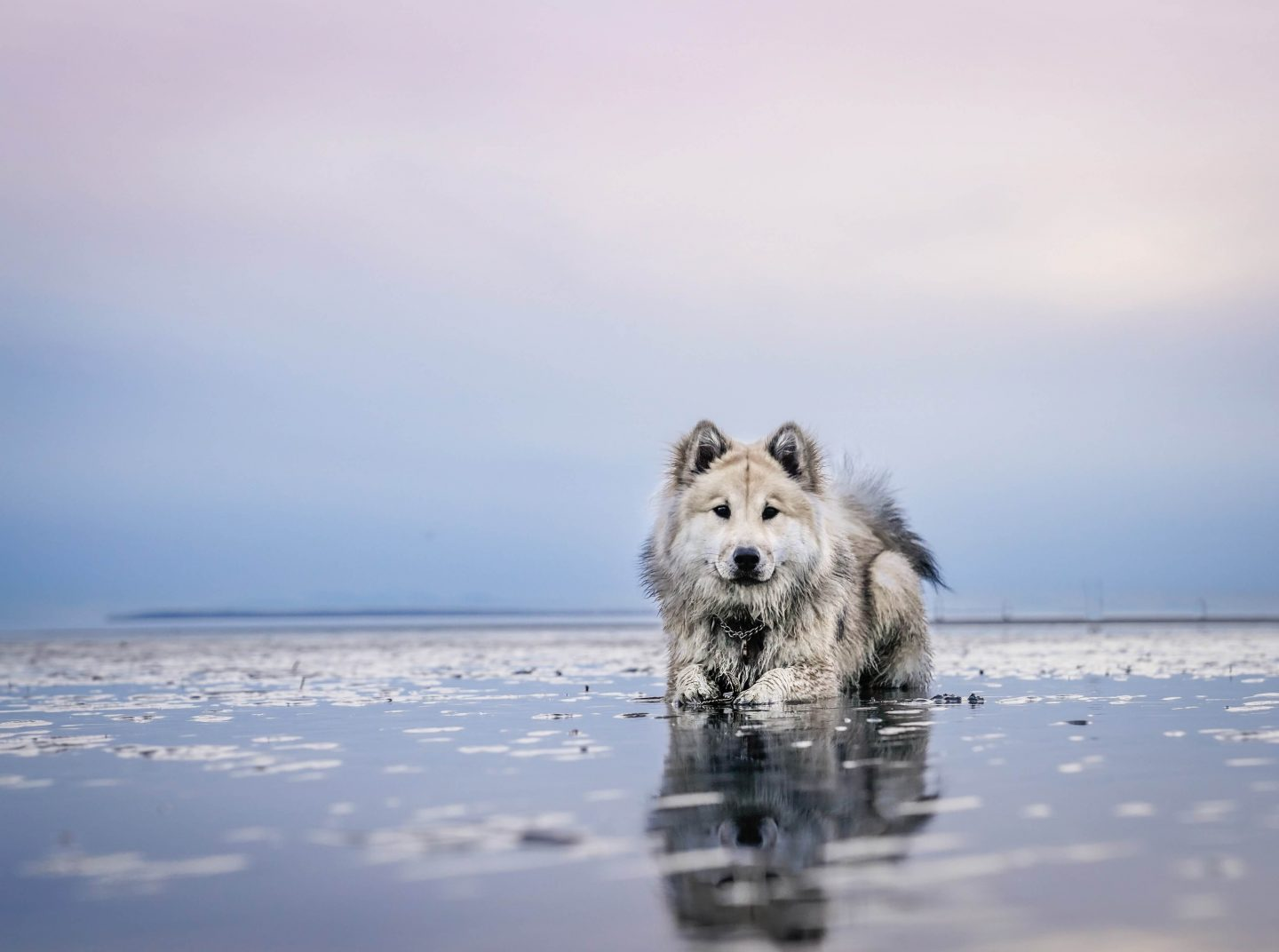 Quiz about dogs - dog in the sea