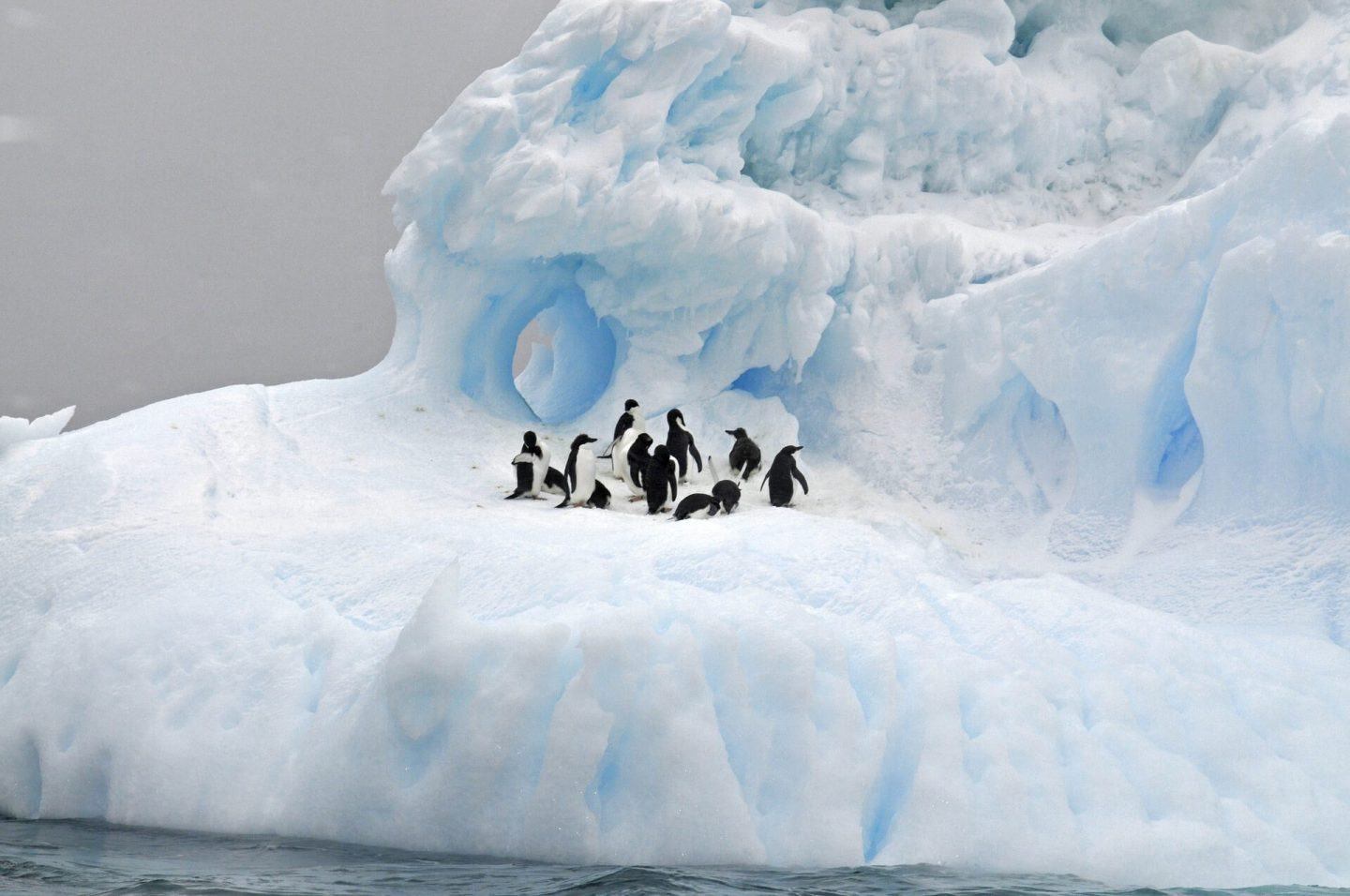 Geography questions and answers - penguins